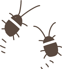 赤ちゃんゴキブリ.jpg