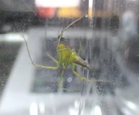 緑色のクモ。.JPG